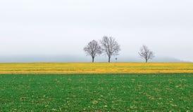 彩色场在一有雾的11月天 库存图片