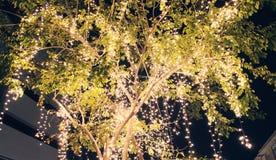 彩色小灯在树夜背景中 库存照片