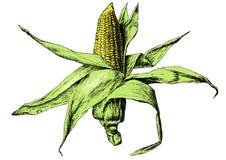 彩色插图用玉米 免版税库存图片