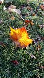 彩色玻璃叶子 库存图片