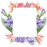水彩花卉贺卡 水彩百花香 装饰花卉框架 背景查出的白色 图库摄影