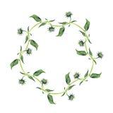 水彩花圈或诗歌选 绿色叶子 免版税库存照片