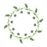 水彩花圈或诗歌选 绿色叶子 库存图片