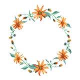 水彩花圈 与叶子的橙色雏菊 免版税库存照片