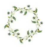 水彩花圈 与绿色叶子的黄色花 库存照片
