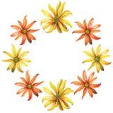水彩花圈 黄色和橙色雏菊花 免版税库存图片