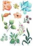 水彩花束和花的被绘的收藏 在白色背景隔绝的手拉的设计元素 图库摄影