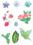 水彩花束和花的被绘的收藏 在白色背景隔绝的手拉的设计元素 免版税库存照片