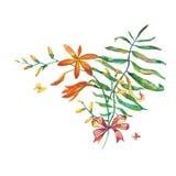水彩花束 库存例证