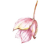 水彩花桃红色 向量例证