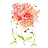 水彩花框架 向量例证