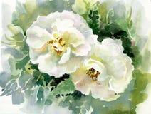 水彩花汇集:玫瑰 免版税库存照片