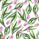水彩花花卉桃红色郁金香无缝的样式背景 免版税库存照片