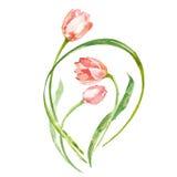 水彩花郁金香 向量例证