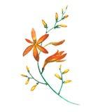 水彩花 向量例证