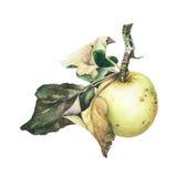 水彩苹果计算机 免版税库存图片