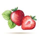 水彩草莓 库存图片