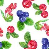 水彩莓果集合用野草莓蔓越桔蓝莓伏牛花 库存图片