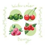 水彩莓果集合 库存例证