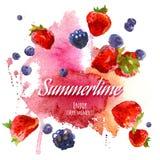 水彩莓果 库存照片