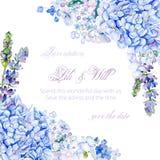 水彩蓝色八仙花属,淡紫色框架  库存照片