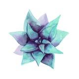 水彩蓝色多汁植物 顶视图 异乎寻常的花 免版税库存照片