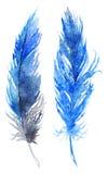 水彩蓝色鸟羽毛对集合 库存图片