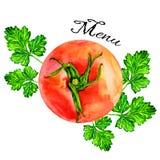 水彩蕃茄手拉的绘画例证 库存照片