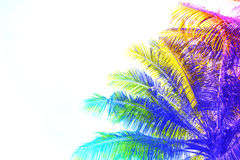 彩虹上色了在天空背景的棕榈树冠 与椰子树树的意想不到的被定调子的照片在白色 免版税库存图片