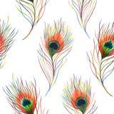 彩虹五颜六色的孔雀鸟羽毛无缝的样式背景纹理 免版税库存照片