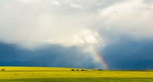 彩虹从云彩发光在麦田的黑暗的背景 免版税库存照片