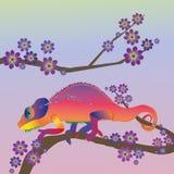 彩虹变色蜥蜴 免版税库存照片