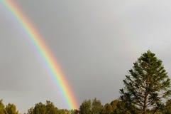 彩虹和南洋杉heterophylla 免版税库存照片