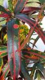 彩虹植物 免版税图库摄影