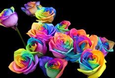 彩虹玫瑰 库存图片