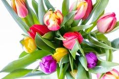 彩虹郁金香花束在白色背景的 免版税库存照片