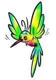 彩虹鸟蜂鸟 免版税库存照片