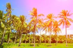彩虹轻的椰子树树 与掌上型计算机的热带横向 在蓝天的棕榈树冠 免版税库存照片