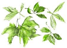 水彩被设置的绿色叶子 皇族释放例证