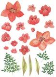 水彩被绘的收藏 优秀设计水彩开花和邀请的叶子元素 库存图片