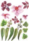 水彩被绘的收藏 优秀设计水彩开花和邀请的叶子元素 免版税库存照片