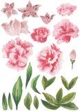水彩被绘的收藏 优秀设计水彩开花和邀请的叶子元素 免版税库存图片