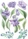 水彩被绘的收藏 水彩花和叶子构成 邀请的元素 图库摄影