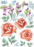 水彩被绘的收藏 水彩花和叶子构成 邀请的元素 库存图片