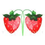 水彩被绘的草莓 库存照片
