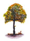 水彩被绘的结构树 图库摄影