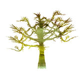 水彩被绘的结构树 库存照片