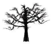 水彩被绘的结构树 库存图片