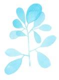 水彩装饰蓝色分支 图库摄影