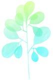 水彩装饰蓝绿色分支 图库摄影